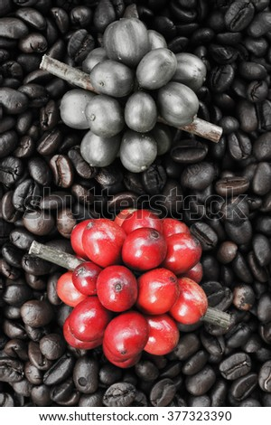 Fresh coffee beans on coffee beans backgournd take with selective color technique and art lighting - stock photo