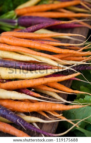 Fresh Colored Carrots - stock photo