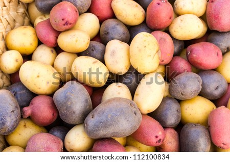 Fresh colorful potatoes red white blue on display at the market - stock photo