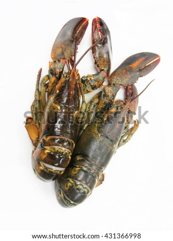 fresh common lobster on a white background.  - stock photo