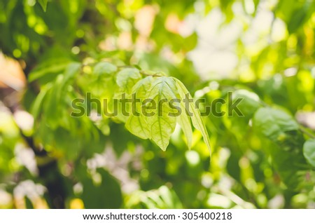 fresh condition and blur green leaves on green background - stock photo