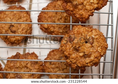 Fresh cooling oatmeal chocolate chip cookie set onto a rack. A healthy alternative with the the oats for a delicious, indulgent, edible homemade sweet snack or tasty treat. Baked a golden brown color. - stock photo