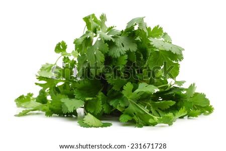 fresh coriander  - stock photo