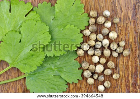 Fresh Coriander leaves with seeds, coriandrum sativum, also called pak chee, cilantro and chinese parsley. - stock photo