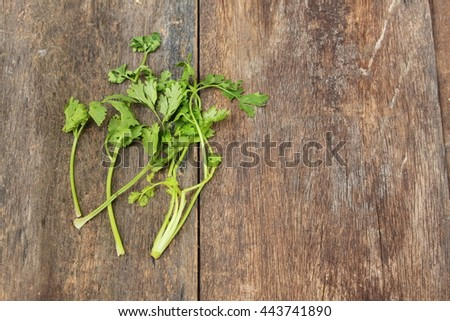 fresh coriander on a wooden table background