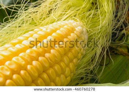 Fresh corn on cobs on black background, closeup - stock photo