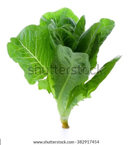 Fresh Cos Lettuce Isolated on White Background - stock photo