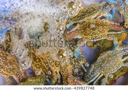 Fresh crab on the market - stock photo