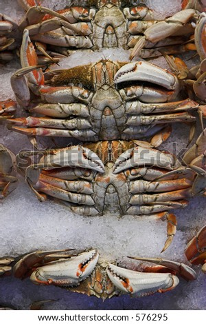 Fresh crabs for sale - stock photo