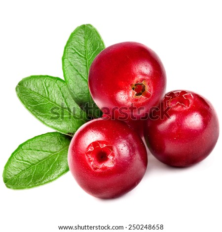 fresh cranberries cowberries isolated on white background - stock photo