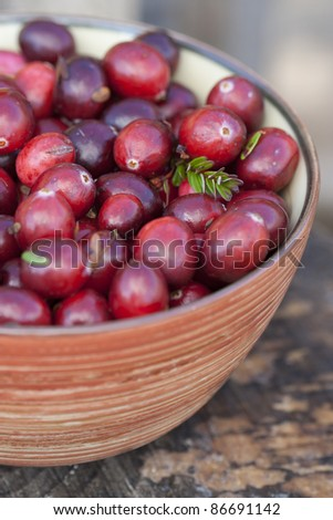 Fresh cranberries in bowl. Just after picking up in a swamp - stock photo