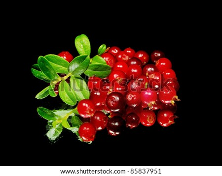 fresh cranberries on a black background with water drops - stock photo