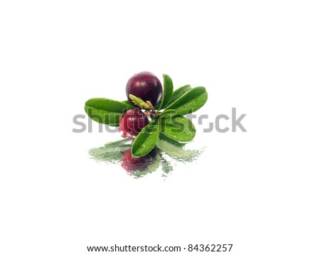 fresh cranberries on a white background with water drops - stock photo