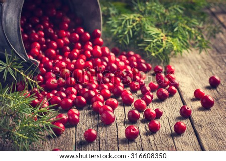 fresh cranberry (cowberry) on wooden background, selective focus, toned - stock photo