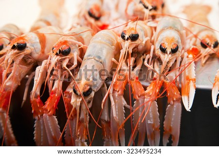 Fresh crawfish on ice in a market - stock photo