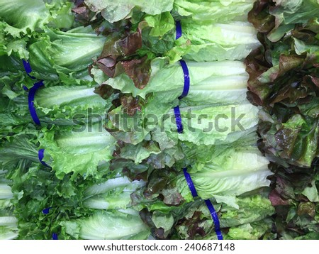 Fresh, crisp romaine lettuce nicely arranged at a local farmers market produce section - stock photo