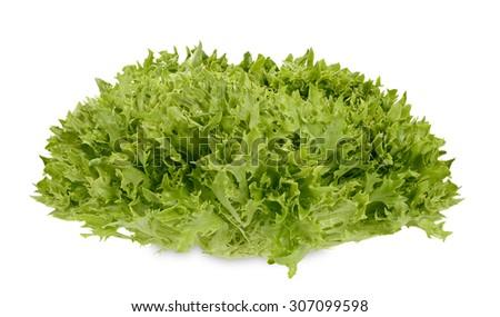 Fresh crisp salad lettuce head - stock photo