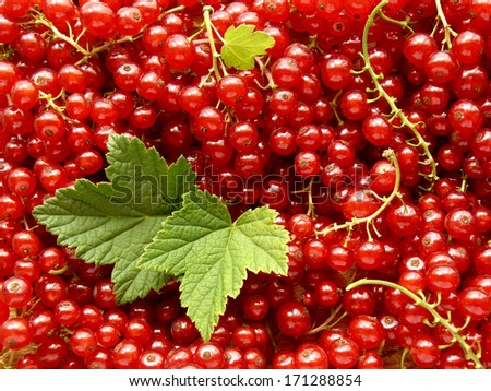 fresh cropped redcurrants with leaves - stock photo