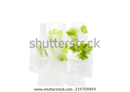Fresh culinary cooking herbs frozen in ice cubes isolated on white background. Healthy fresh cooking. - stock photo
