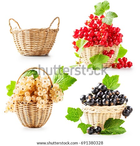 Fresh currant berries and empty basket collection isolated on white background. Healthy eating