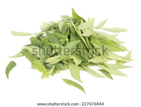 Fresh Curry Leaves, Murraya koenigii  - stock photo
