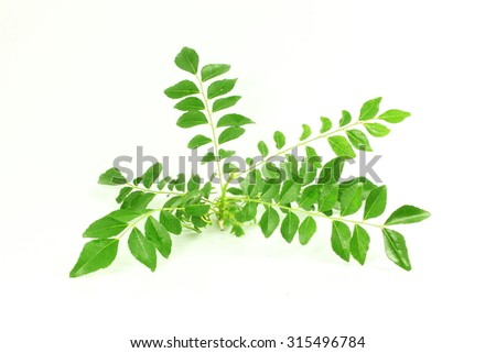 fresh curry leaves or curry patta herb closeup on white background