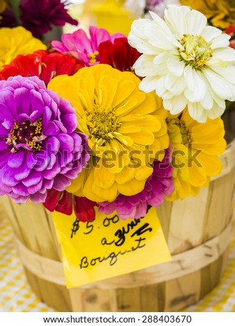 Fresh cut zinnia bouquet at local farm market. - stock photo