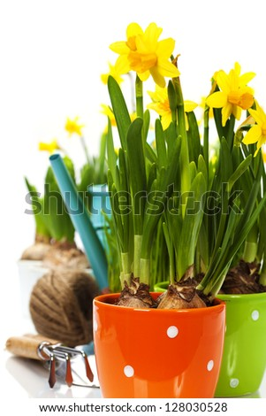 fresh daffodils and garden tools over white - stock photo