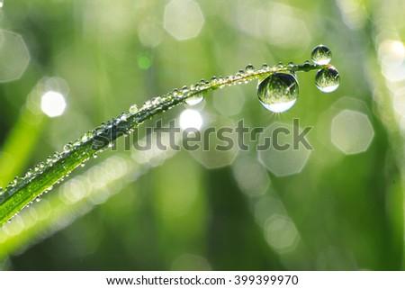 Fresh dewdrops on green grass - stock photo