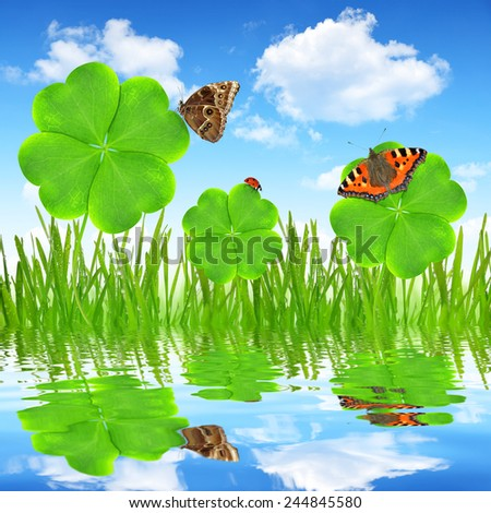 Fresh dewy green grass with clover leaf and butterflies - stock photo