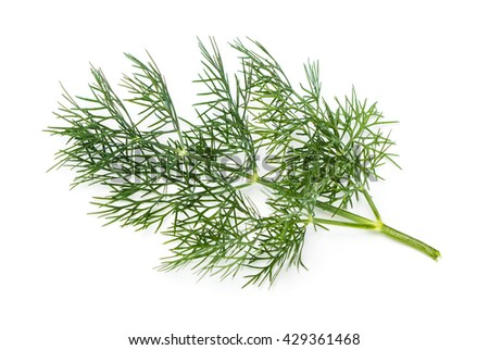 Fresh Dill (Anethum graveolens) on a white background - stock photo