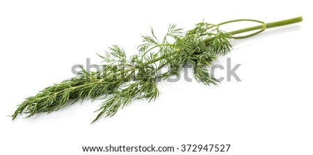 Fresh dill herbs over white background
