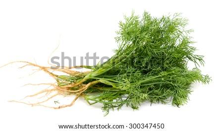 Fresh Dill isolated - stock photo