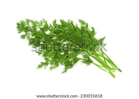 fresh dill on white background  - stock photo