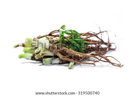 Fresh Dong Quai and  Dong Quai leaf on white background, Ginseng, Herbal. - stock photo