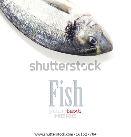 fresh dorada fish over white - food and drink (with easy removable sample text) - stock photo
