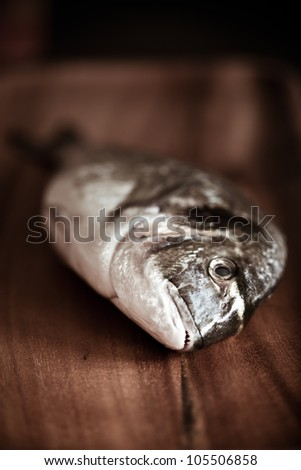 Fresh dorado - stock photo