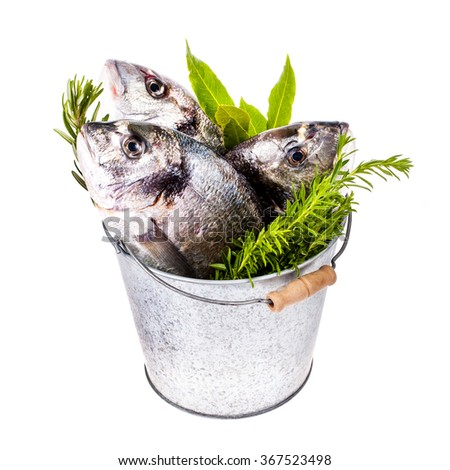 fresh Dorado fish and other fish in a tin bucket with fresh leaves and herbs  isolated on white background - stock photo