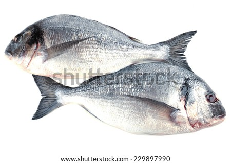 Fresh dorado fish isolated on white