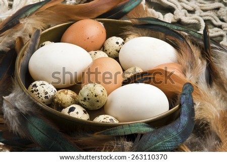 Fresh duck, hen and quail eggs in a copper bowl surrounded by hen and cock feathers - stock photo