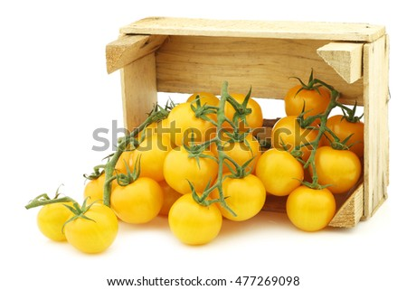 "fresh dutch yellow ""tasty tom"" tomatoes on the vine in a wooden crate on a white background"