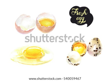 Fresh egg  watercolor illustration. Cracked eggshell with raw yolk, quail eggs isolated on white background.
