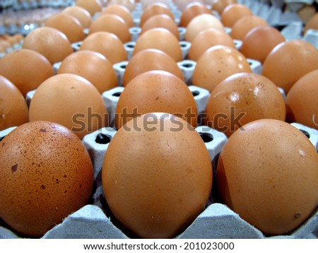 fresh eggs for cooking - stock photo