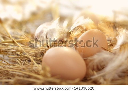 fresh eggs in a nest - stock photo