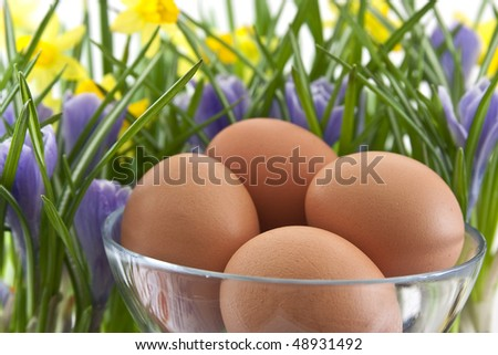 fresh eggs in glass cup with crocuses and daffodils