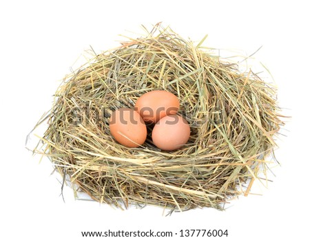 Fresh eggs in the nest