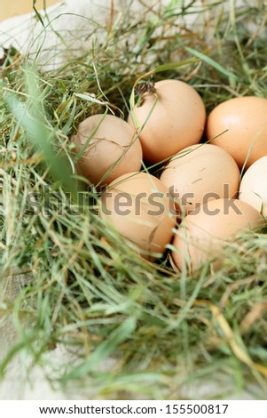 Fresh eggs in the nest, food