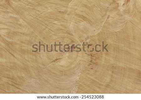 Fresh end cut of very large deciduous tree with tree rings texture with saw marks - stock photo