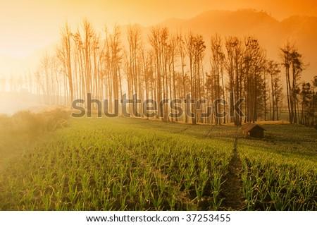 Fresh Farmland Sunrise in Asia Country. - stock photo
