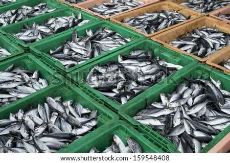 fresh fish. - stock photo